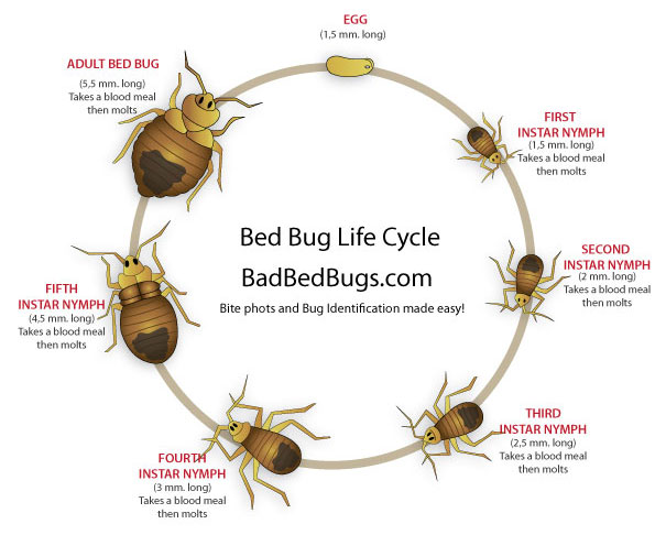 Best Home Product For Bed Bugs